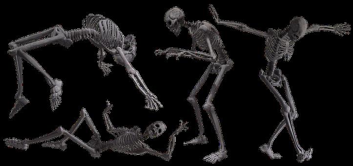 Skeleton, Skull, Bones, Halloween, Human, Anatomy