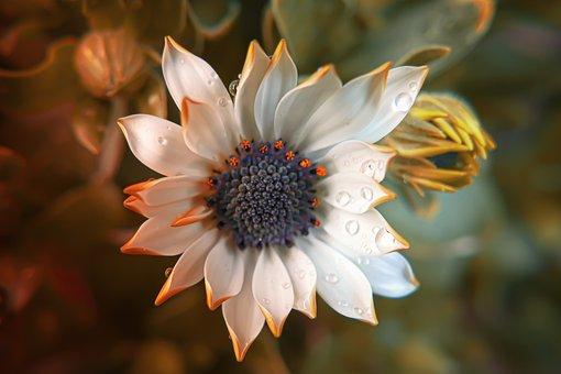 Flower, Spring, Nature, Plant, Summer, Garden, Bloom