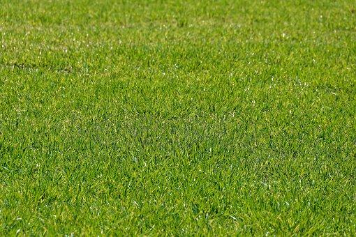 Meadow, Biotope, Grass, Rush, Landscape, Field, Green