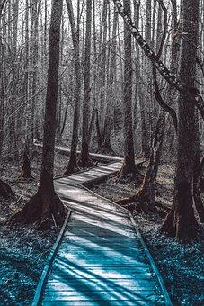Tree, Path, Landscape, Nature, Trees