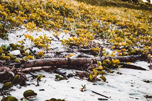 Plants, Leaves, Botany, Nature, Green, Autumn, Beach
