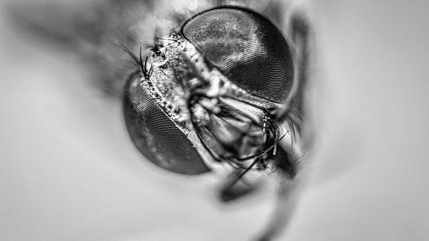 Housefly, Macro, Insect, Nature, Bug, Eyes, Pest, Fly