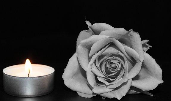 Rose, Blossom, Bloom, Rose Bloom, Black And White