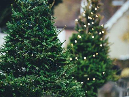 Christmas Tree, Pine Tree, Christmas Lights, Xmas Tree