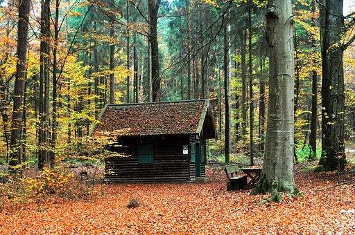 Autumn, Landscape, Tree, Nature, Colorful, Mood, Hut