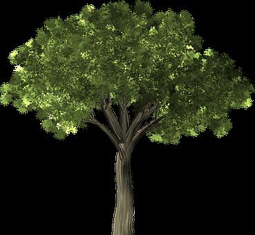 Tree, Elm, Elm Tree, Leaf, Green, Foliage, Branch