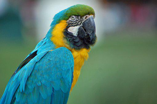 Parrot, Macaw, Close, Bird, Colorful, Feather, Nature