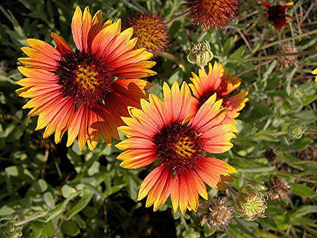 Vibrant, Colorful, Wild Flower, Floral, Nature, Summer