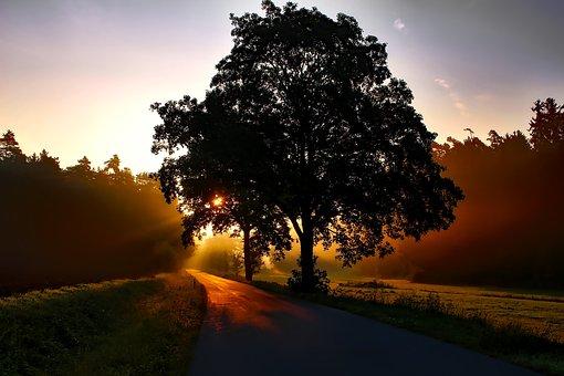 Germany, Sunrise, Dawn, Daybreak, Landscape, Forest