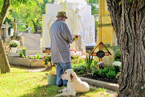 Cemetery, Dog, Woodland Cemetery, Graves, Animals, Rest