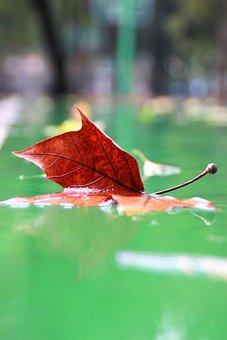 Indus, Playground, Rain, Defoliation, Lu, Autumn