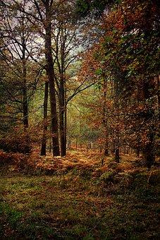 Forest, Woodland, Autumn, Nature, Landscape, Season