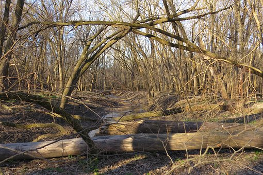 Trees, Logs, Woods, Woodland, Dense, Autumn