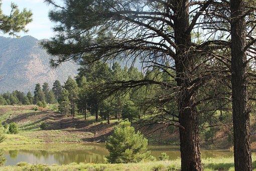 Peaceful, Woodland Scene, Flagstaff, Az