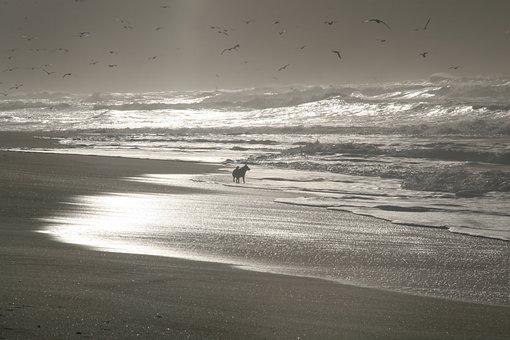 Beach, Sea, Galicia, Husky, Freedom, Enjoy Nature