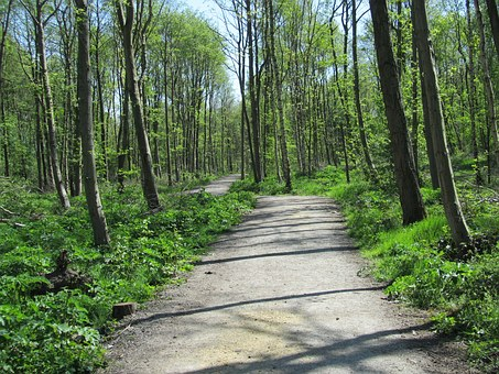 Woodland, Path, Direction, Walk, Trees, Forest, Spring