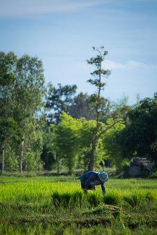 Farmer, Thailand, Udon Thani, Agriculture, Countryside