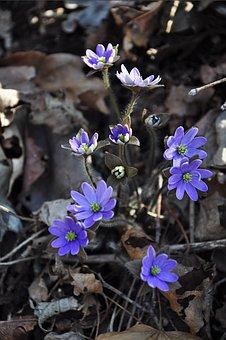 Flowers, Wildflower, Purple, Wildflower Close-ups