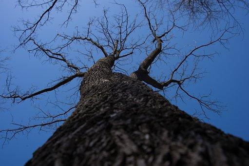 Tree, Park, Fox, Trees, Forest