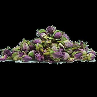 Rose, Pink, Flower, Color, Plant, Floral, Red, Herbs