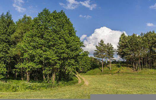 Woods, Trees, Nature, Landscape, Path, Green, Natural