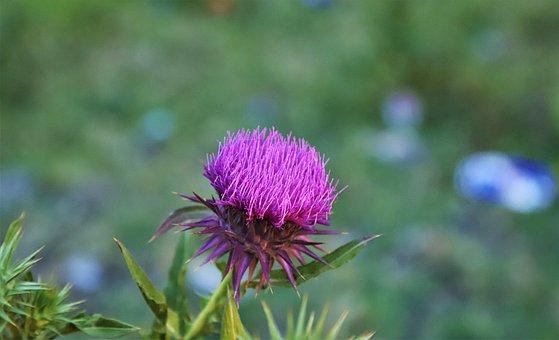 Flower, Nature, Spring, Rose, Summer, Pink, Plant