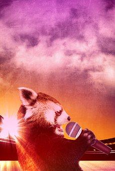 Red Panda, Panda, Animal, Adorable, Singing