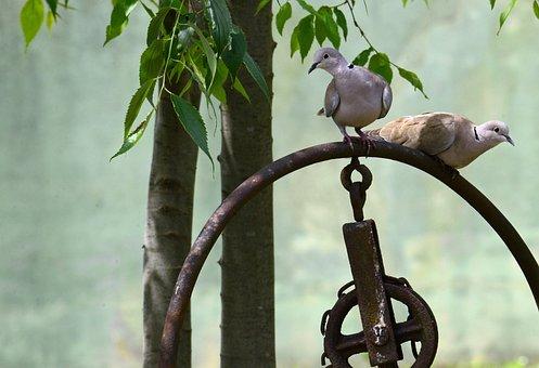 Birds, Turtledove, Animals, Nature