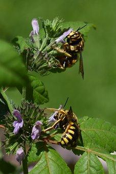 Bees, Flowers, Pollination, Garden