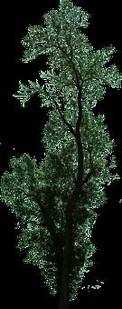 Dead Tree, Dead Tree With No Background, Halloween Tree
