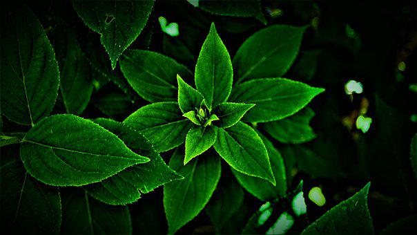 Leaves, Green, Bright, Dark, Darkness, Hope