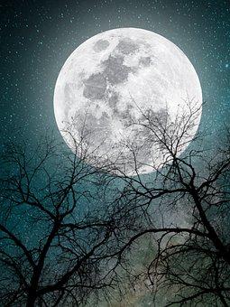 Moonlight, Tree, Moon, Night, Owl, Landscape