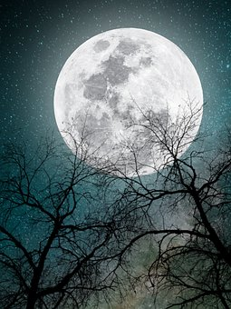 Moonlight, Tree, Moon, Night, Owl