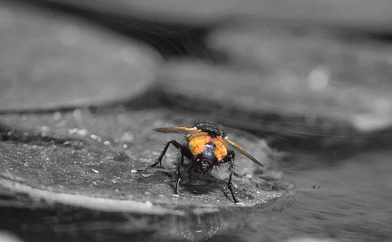 Insect, Water Lily, Insects, Pond, Nature, Flowers