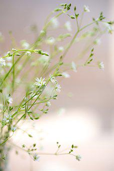Sweetness, Flowers, Pastel, Romantic, Flora