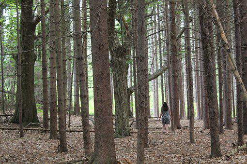 Woods, Forest, Woman, Solitary, Alone, Solemn, Mystical