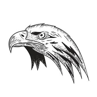 Eagle, Bird, Predator, Bird Of Pray, Wild