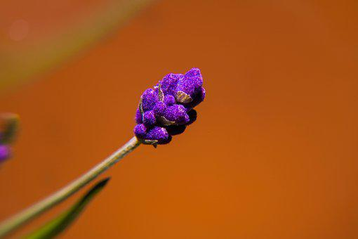 Spring, Pollen, Yellow, Detail, Season, Flower, Purple