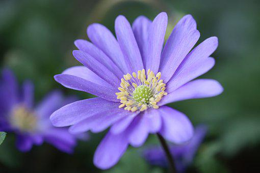 Blue, Flower, Spring, Blossom, Bloom, Nature, Garden