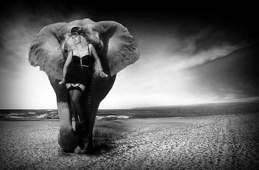 Elephant, Ivory, Nature, Woman