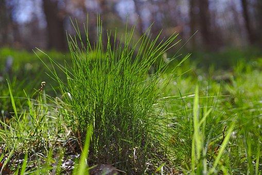 Grass, Meadow, Green, Glade, Sun, Rush