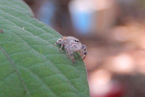 Spider, Insect, Nature, Tarantula