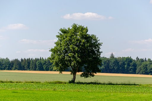 Tree, Reported, Grass, Landscape, Nature, Summer, Sun