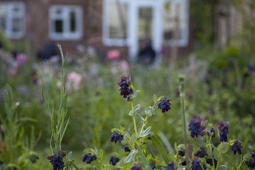 Lockdown, Garden, Evening, Nature, Plants, Flowers
