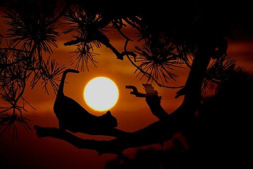 Cat, Tree, Stretching, Dusk, Evening