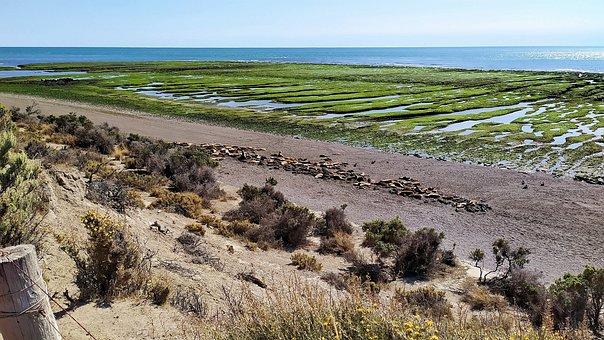 Sea Lions, The Northern Tip, Peninsula Valdés