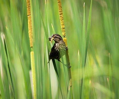 Carouge, Bird, Nature, Flight, Pen, Beak, Plumage, Wild