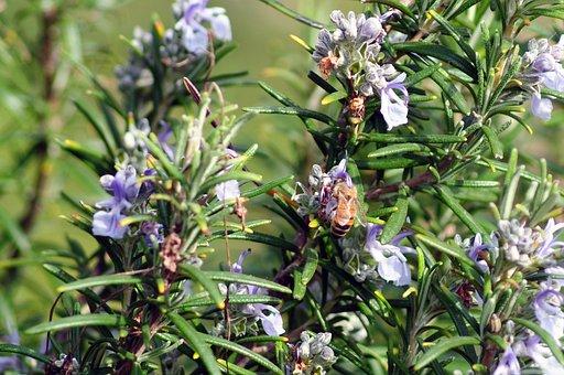 Bee, Flower, Pollen, Spring, Honey