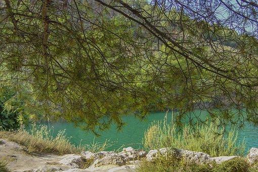 Landscape, Laguna, Nature, Pine, Ruidera, Royal City