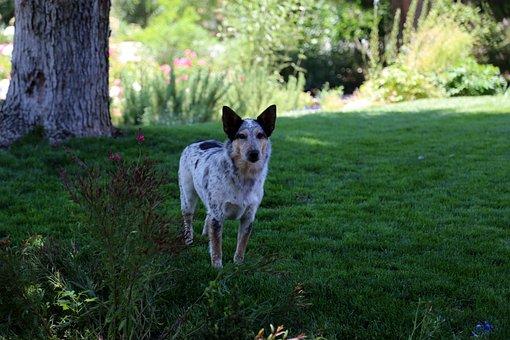 Dog, Grass, Animal, Pet, Nature, Play